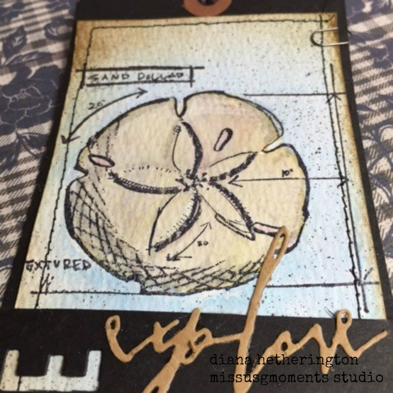 tim holtz explore the beach